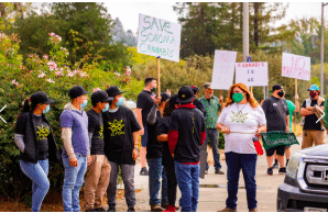 Cannabis farmers, employees protest outside Sonoma County supervisors' offices