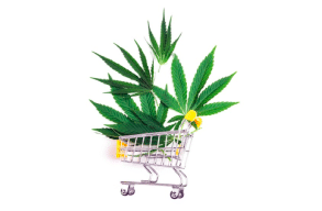 Cannabis Regulations: 5 Ways To Legally Purchase Cannabis