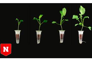 Hemp-based composite could facilitate soil-free farming