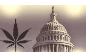 Some cannabis firms see 'disaster' in federal legalization Says Politico Article