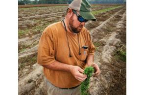 South Carolina: Dorchester Hemp farmer files lawsuit following arrest and destruction of hemp crop